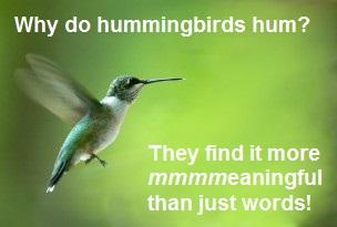 hummingbird hum